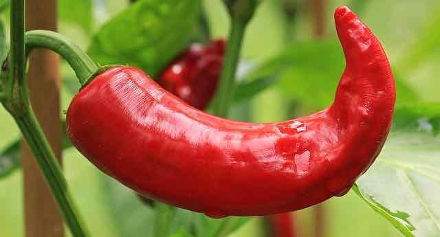 abnehmen am Bauch mit Chilis